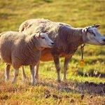 Bilance da bestiame: le basi